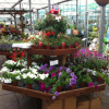 Happy Grow Nursery and Garden Centre